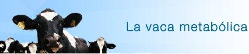 La vaca metab�lica